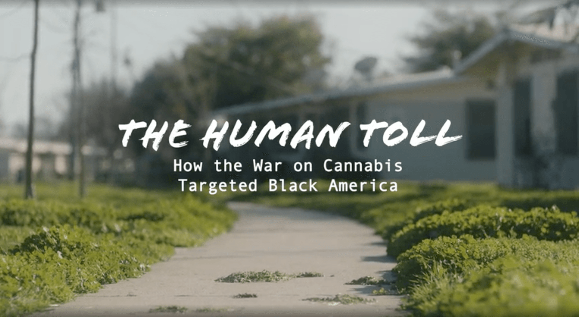 Watch The Human Toll: How the War on Cannabis Targeted Black America